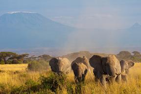 Vakantie Kenia